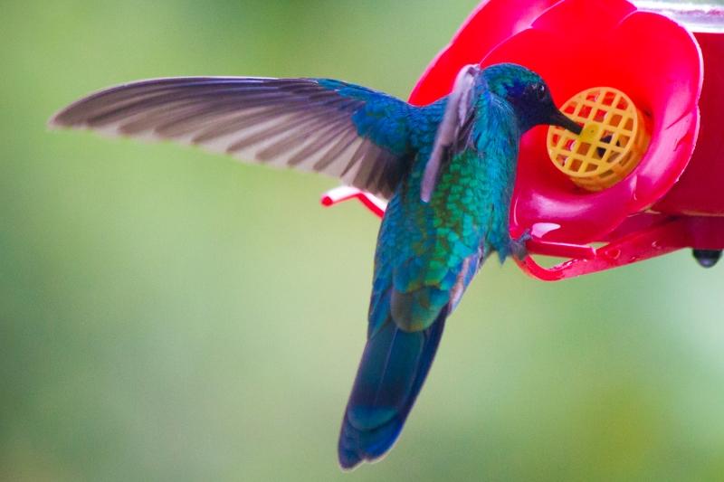Mirador de Aves