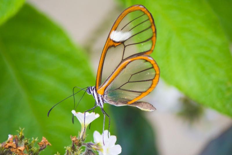 Observador de Mariposas