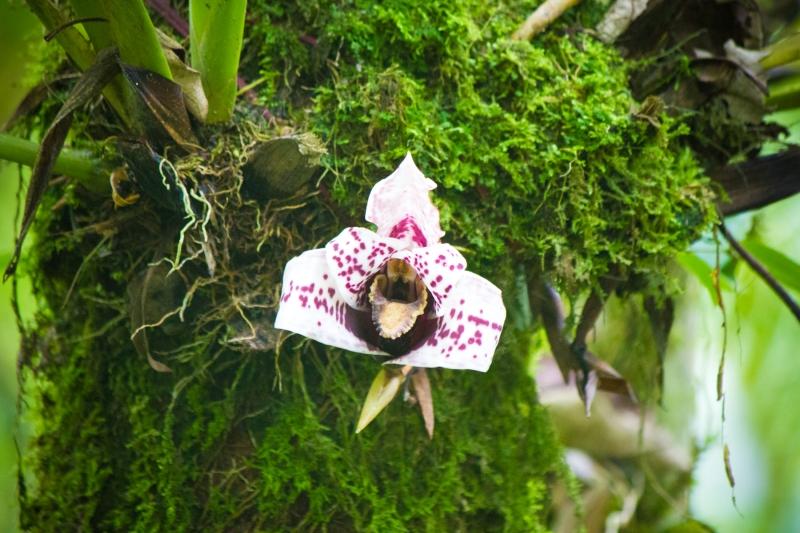 Bosque de Orquídeas